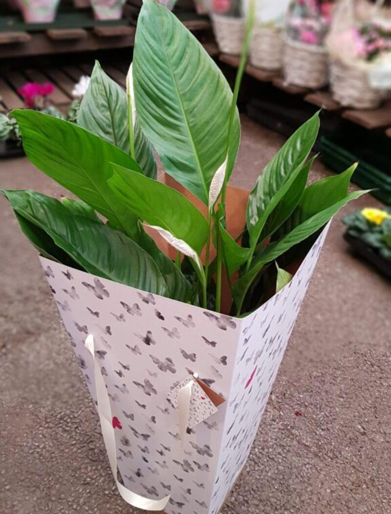 Plants make a perfect gift